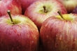 apples google(1) 2